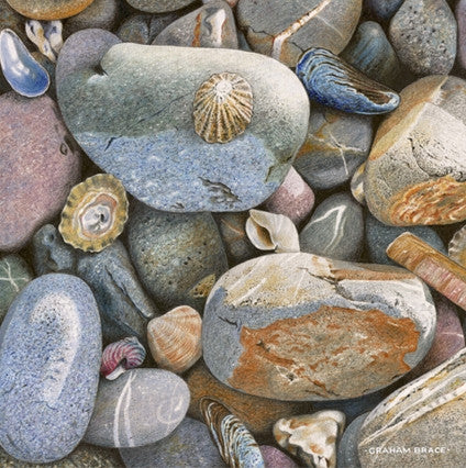 Pebbles and Seashells