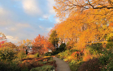 Fort Tryon Fall 2018 Social Sunday