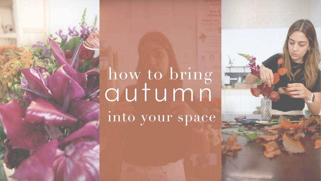 HOL Tips & Tricks Episode 2: How to Bring Autumn into Your Space