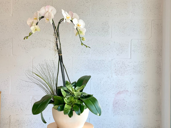 orchid delivery miami florida