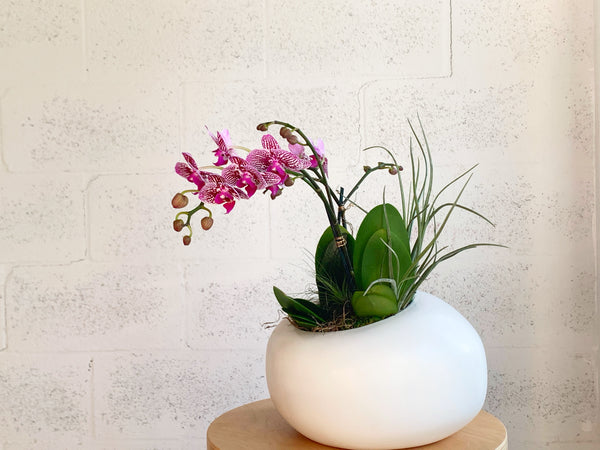 Orchid Duo and Air Plants in Organic Modern by The Plantscape