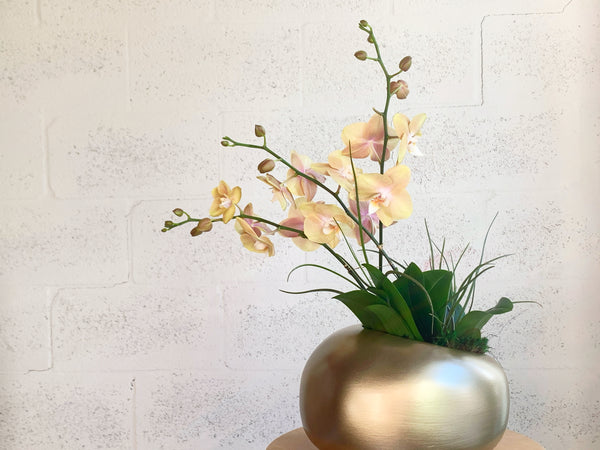 Orchid Trio and Air Plants in Organic Modern by The Plantscape