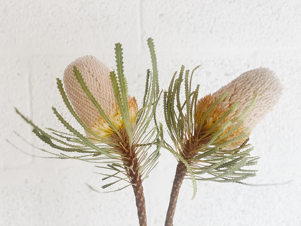 Banksia Stems - Shipping