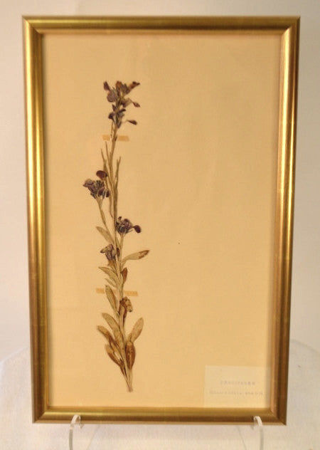 Framed Herbier Compiled By DEYROLLES, PARIS