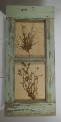 Herbiers Framed in Antique Window Frame