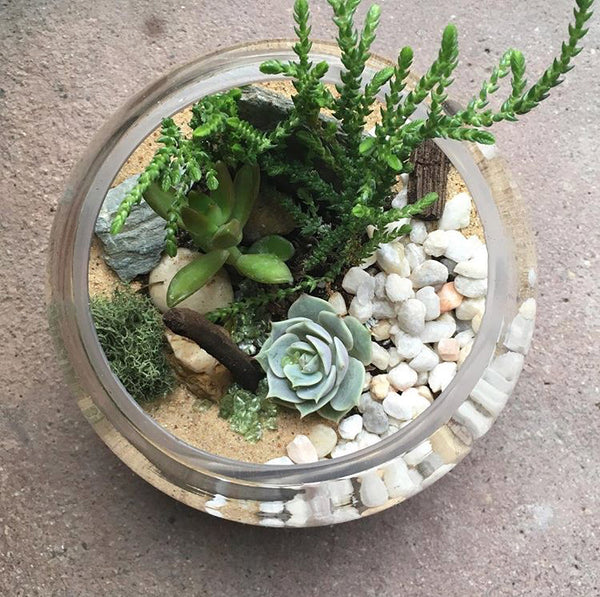 Terrarium Workshop - Drop In