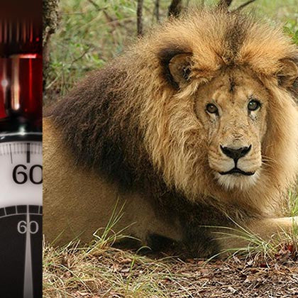 60 Minutes Documents the Incredible Rescue of Abused Circus Lions