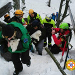 Sheepdog Puppies Rescued After Italian Avalanche