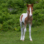 Squee Alert! 10 Adorable Baby Horses