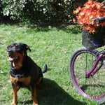 6 Tips on How to Bike With A Dog Safely