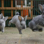 10 Cutest Bunny GIFs
