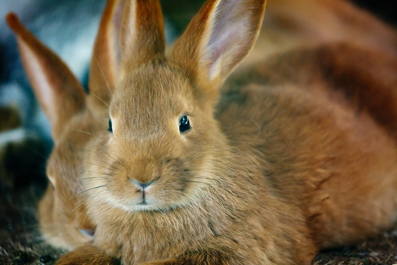 The Bunny Files:  10 Cutest Bunny Pictures