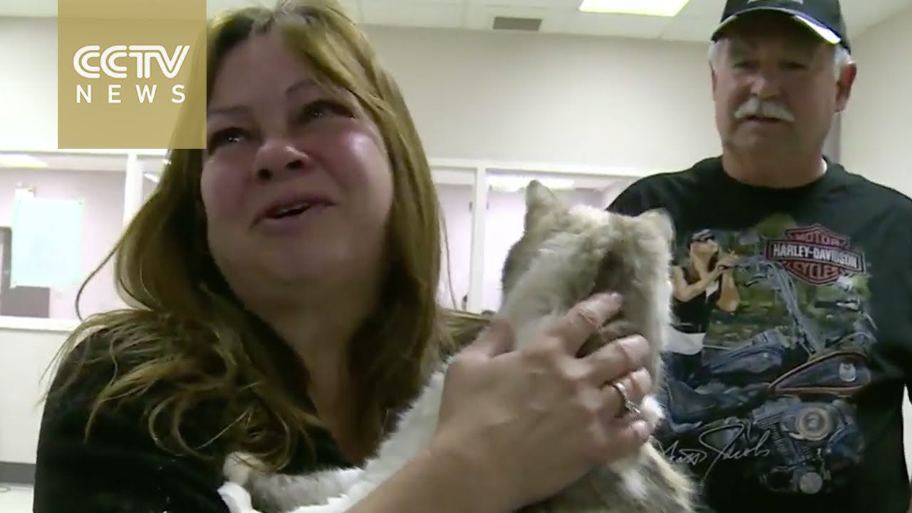 Pets and Their Owners Reunited After Canadian Wildfire