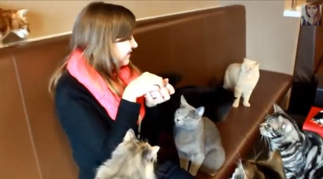 An Inside Look at the Cat Cafes of Japan