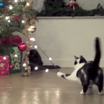 Tis the Season for Cats to Attack Christmas Trees!