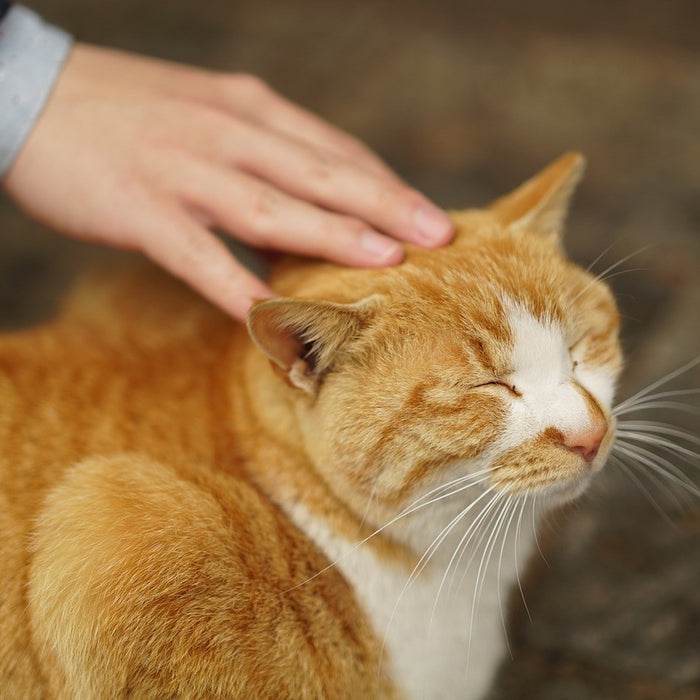 7 healing benefits of cat purrs