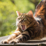 Science Reveals Why Cats Love to Stretch So Much