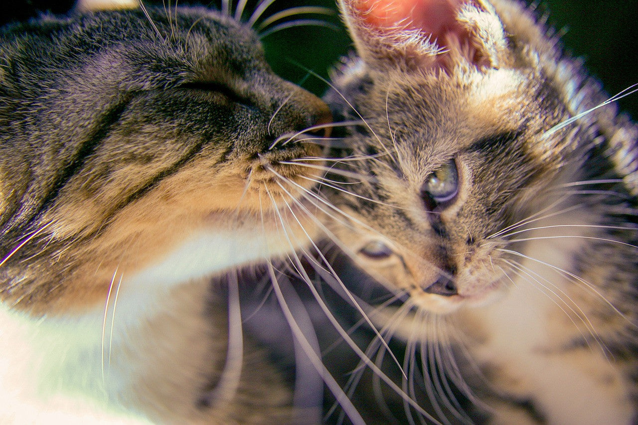 10 Best Quotes About Cats