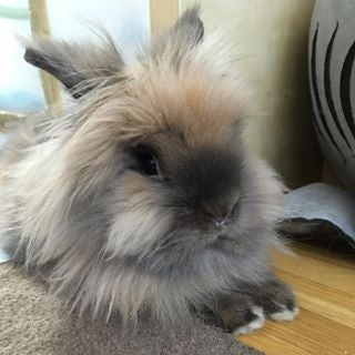 Cute and Fluffy Adopted Bunny Gets a New Home