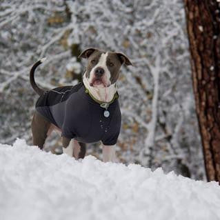 cold weather dog gear