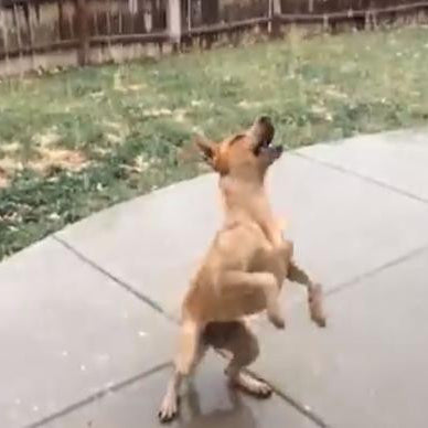 Video:  Cute Dog Gets Excited by First Snowfall