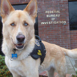 Video:  Victim Assistance Therapy Dog Joins the FBI