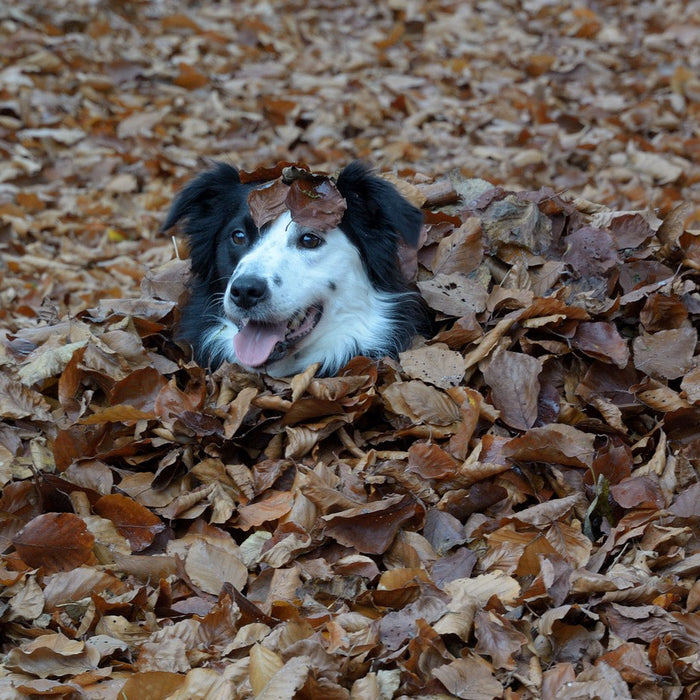 6 Important Pet Safety Tips for Fall
