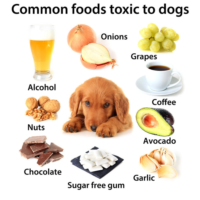 harmful foods for dogs