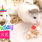 Squee Alert:  It's a Tiny Hamster Birthday Cake!