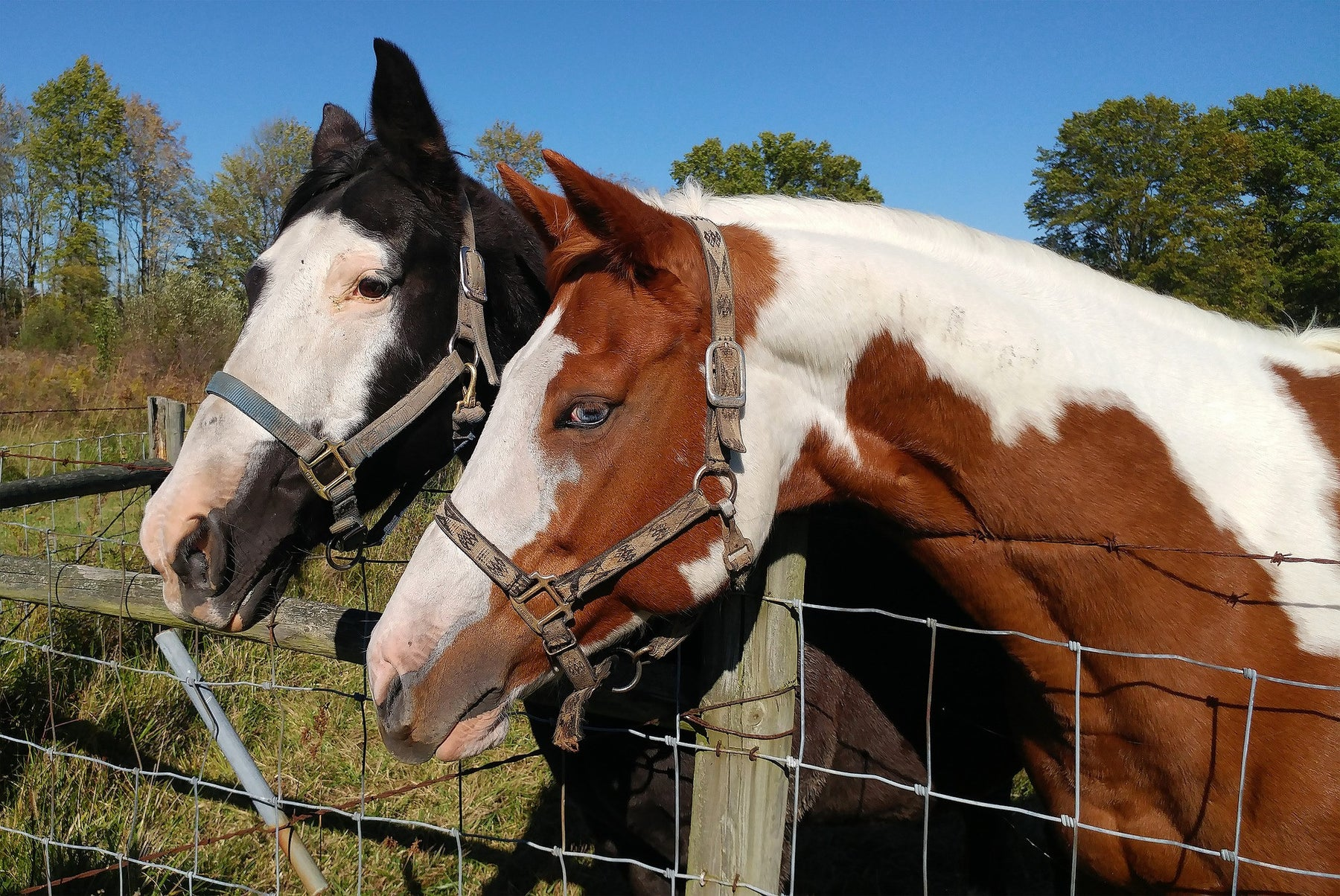 Researchers Teach Horses to Communicate with Symbols