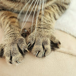 8 Facts About Declawing Cats