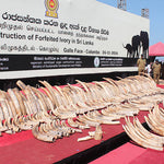 Sri Lanka Takes Stand Against Illegal Ivory Trade