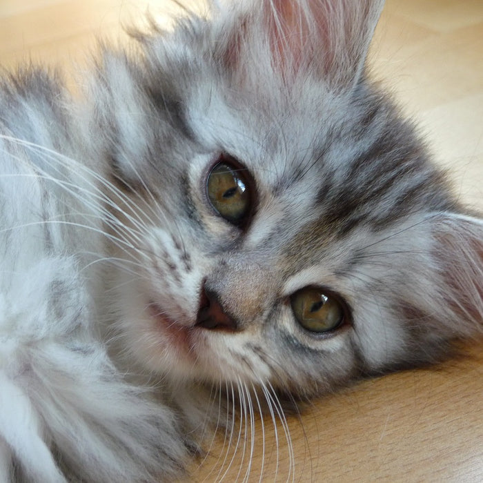 New Kitten?  Check Out These Trending Cat Names!