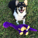Stephen King's Corgi Molly Takes Over Twitter!