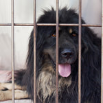Ohio Makes Shelter Animals Their 'Official' Pet