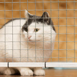 Outdoor Pet Enclosures for Cats