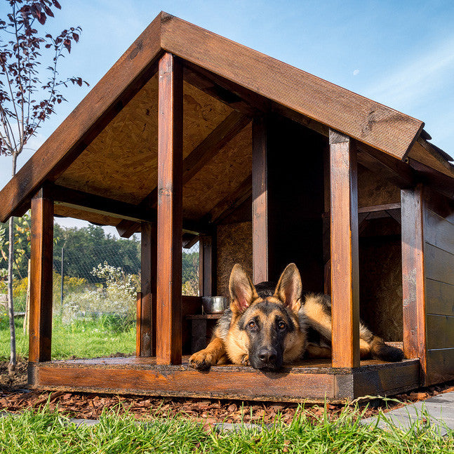 pet boarding facilities for dogs