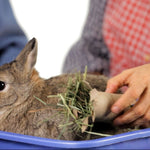DIY Toy Ideas for Your Pet Rabbit