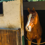 What is the Right Stall Size for Your Horse?