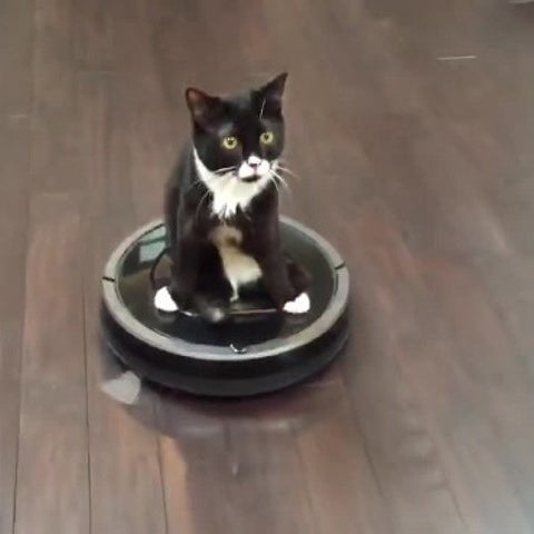Cute Two-Legged Kitten Gets Around In Style!