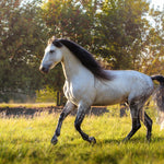 What You Need To Know About Andalusian Horse Temperament