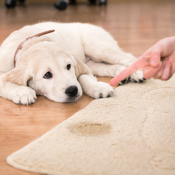 The 5 Best Carpet Cleaners For Pet Stains
