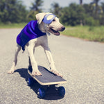 8 Classic Stupid Dog Tricks