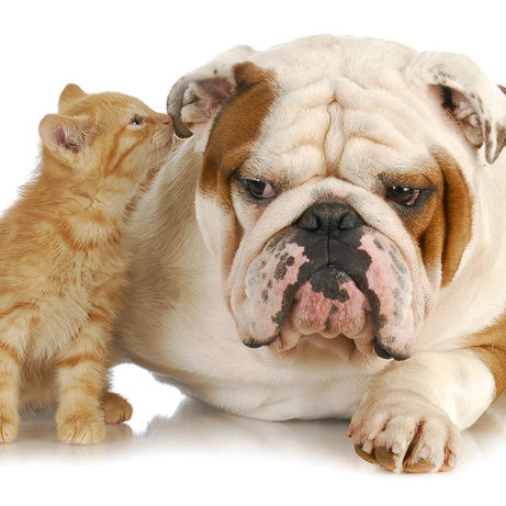 funny cats annoying dogs