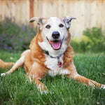 8 Tips for Creating a Dog-Friendly Backyard