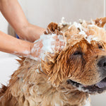Homemade Flea Shampoo for Dogs: Four Recipes and Their Benefits