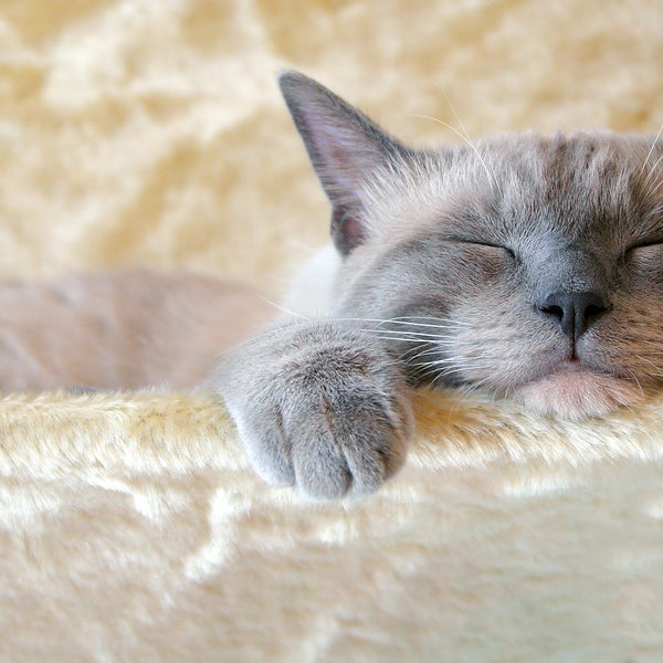 7 Incredible Facts about Cats