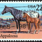 The Most Famous Appaloosa Horse Names