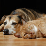 Pet Grief:  Helping Your Pet Cope with the Loss of Another Pet