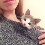 Adorable Video:  Tiny Rescue Kitten Grows Up